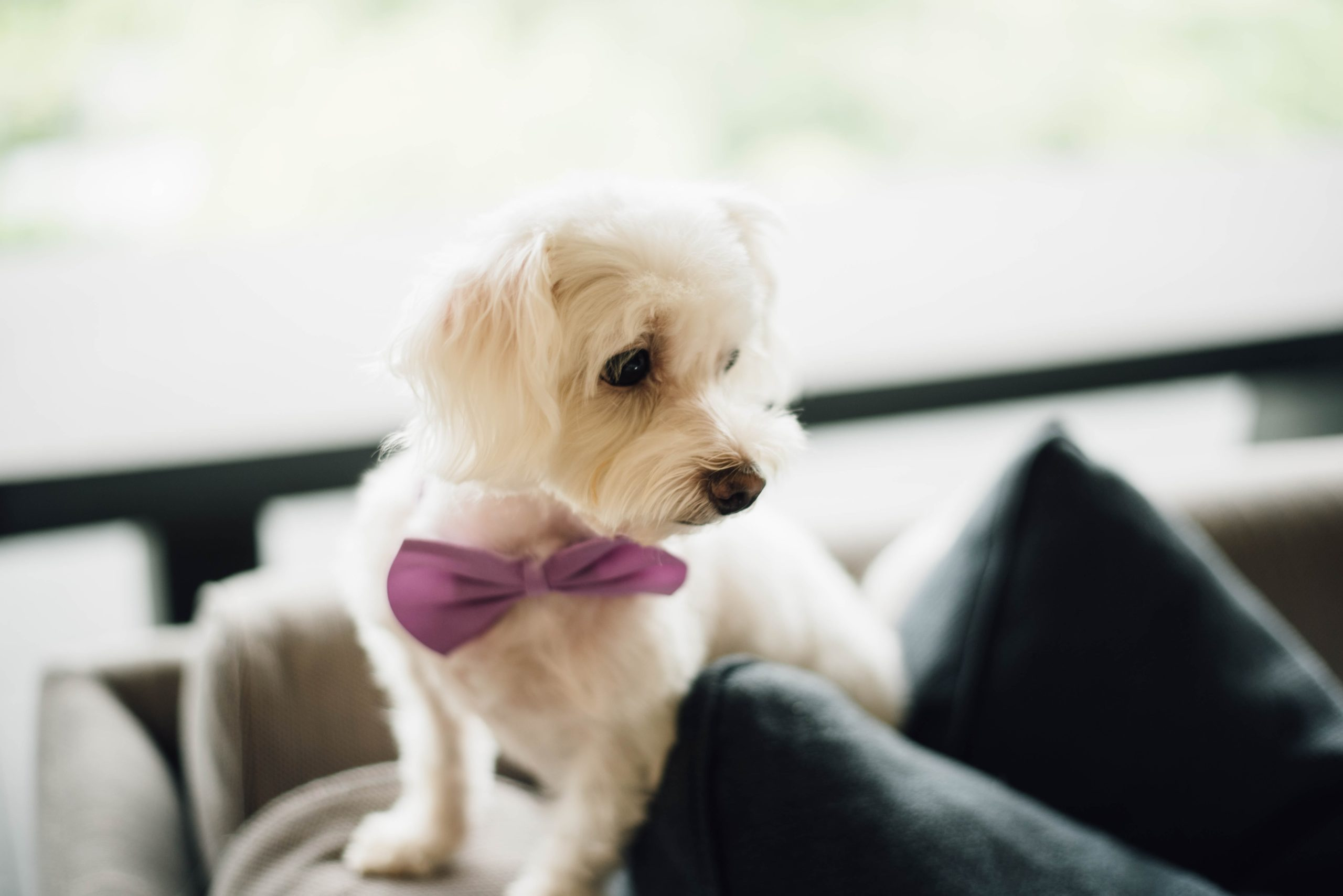 Involving your dog on your wedding day